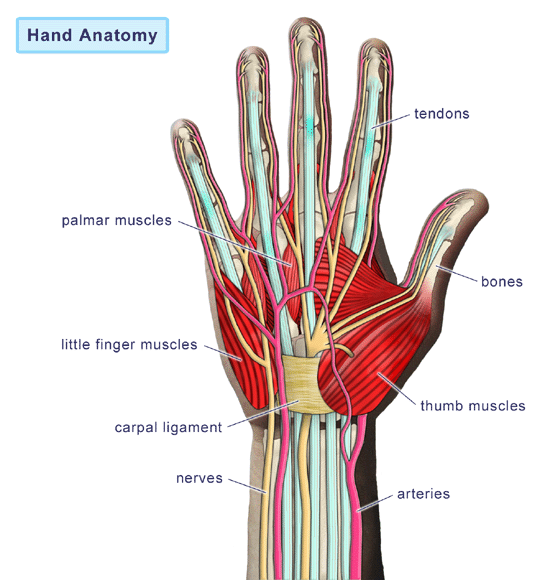 diagramH hand injuries